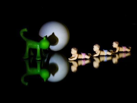 """"""" Les triplés et le chat """"   cliché réalisé par Dominique"""