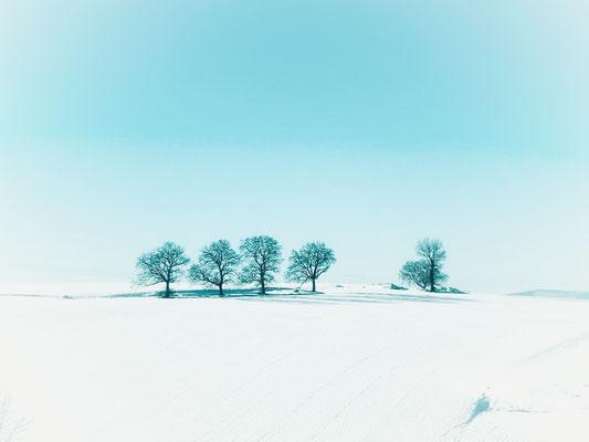 """""""arbres esseulés dans le neige"""" cliché réalisé par Sylvie"""