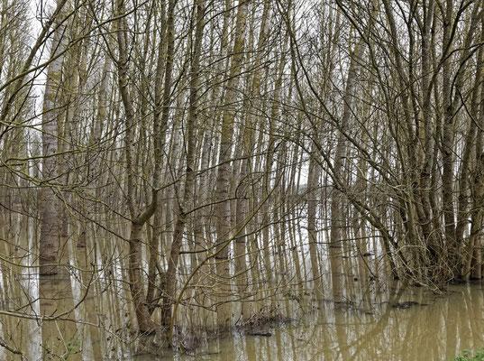 """"""" Les pieds dans l'eau """"  cliché  réalisé  par  Robert"""