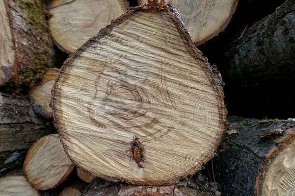 """""""Les arbres oubliés""""  cliché réalisé par  Jacques"""