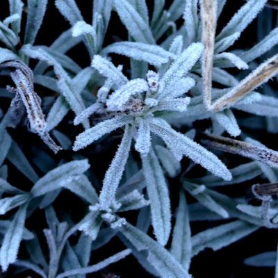 """""""Le froid"""" cliché réalisé par Laurence"""