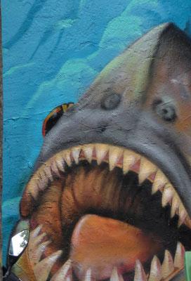 """""""Le requin""""  cliché  réalisé  par  Virginie"""