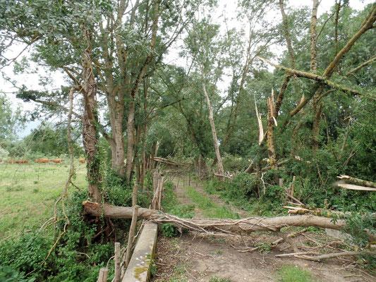 """""""  De nombreux troncs jonchent le sol des chemins forestiers  """" cliché réalisé par Laurent"""