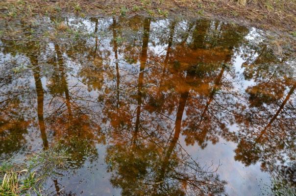 """"""" Les pieds dans l'eau """"  cliché réalisé par Yves"""