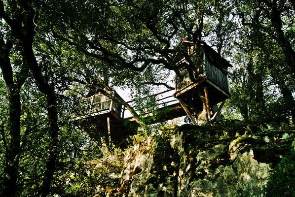 """"""" la forêt de cabanes (marquessac) """"  cliché réalisé par  Thierry"""