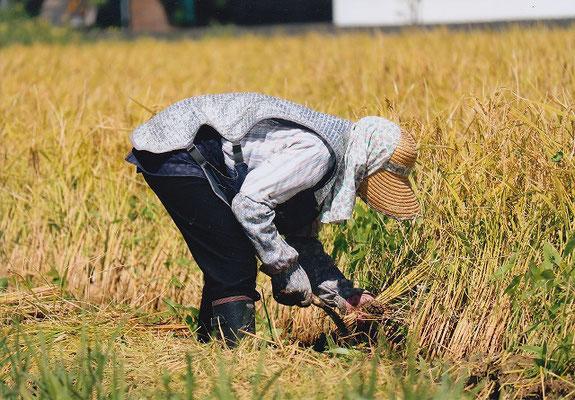 準特選 北國写真連盟賞 ばあちゃんとお米 西川塔子