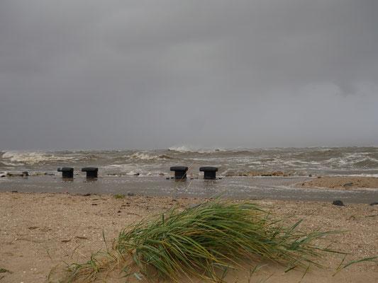 Der Strandhafer beugt sich im Wind