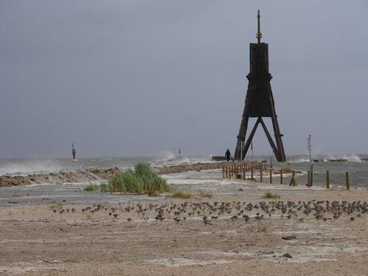 Im Schutz der kleinen Sanddünenen sammeln sich viele Vögel