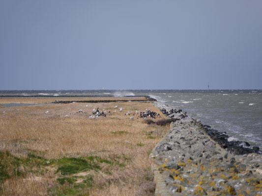 Vor der Residenz Windjammer sind die Salzwiesen. Dort sind zahlreiche Vogelarten zu sehen.