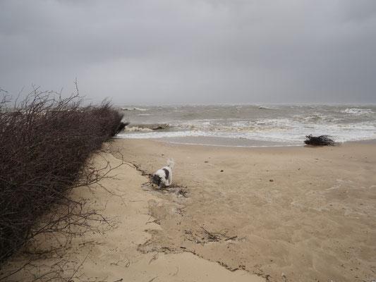 Schnüffeln und spielen im Sturm - die Vierbeiner stört das Wetter nicht