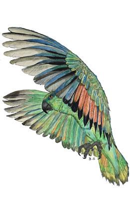 Grüner Amazonas Papagei
