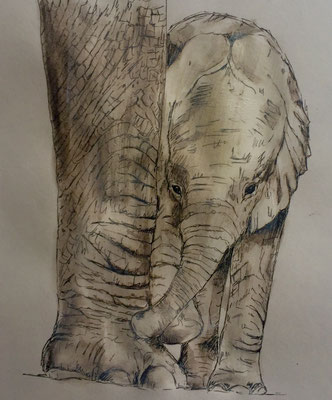 Afrikanisches Elefantenkalb