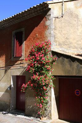 Bild: Frühling in Robion