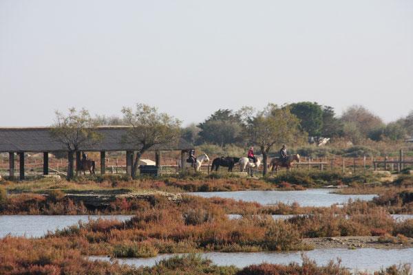 Bild: Reiter in der Camargue