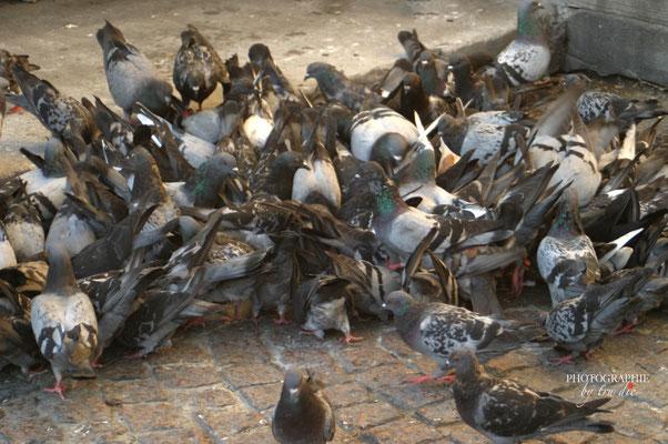 Bild: Tauben in Paris