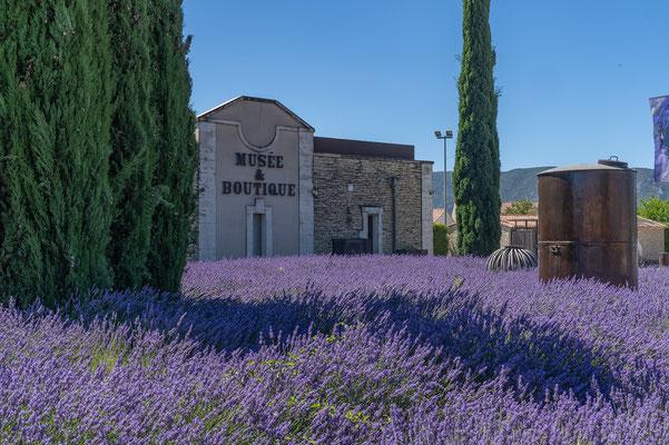 Bild: Musée de la Lavande in Coustellet, Vaucluse, Provence