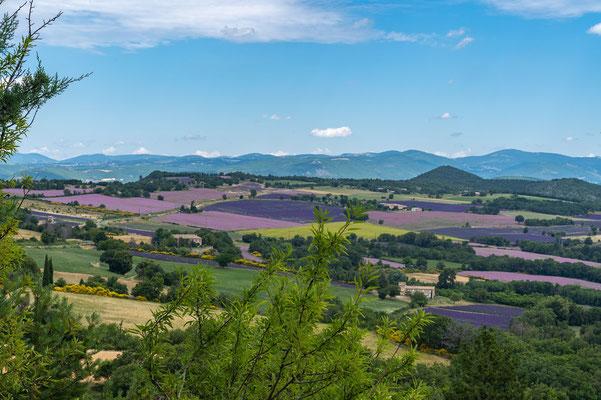 Bild: Im Sommer Lavendelblüte und Salbeiblüte bei Vachères