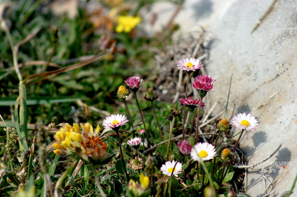 Bild: Halbinsel Crozon (Bild: Trude Diehl)