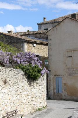 Bild: Frühling in Ménerbes