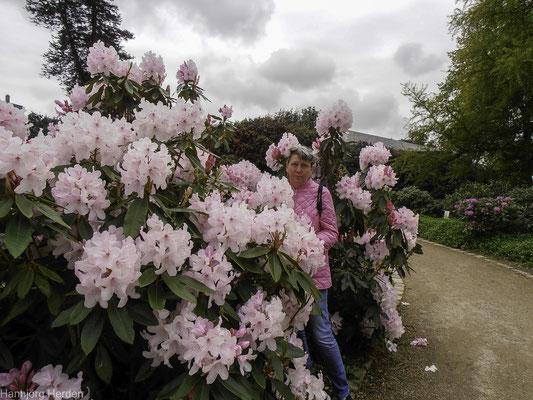 Bild: Jardin des Plantes in Avranches, Normandie