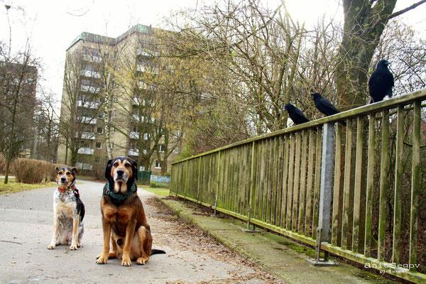 Hundetraining für Stadthunde