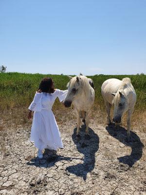 Visite chevaux Camargue en liberté