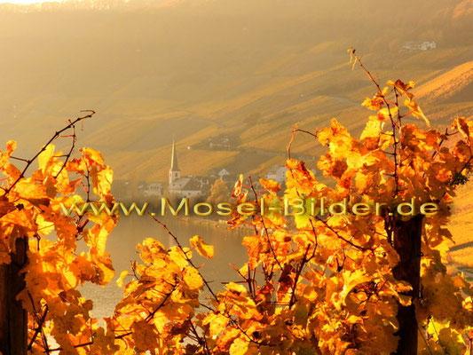Blick auf  Piesport im Herbst