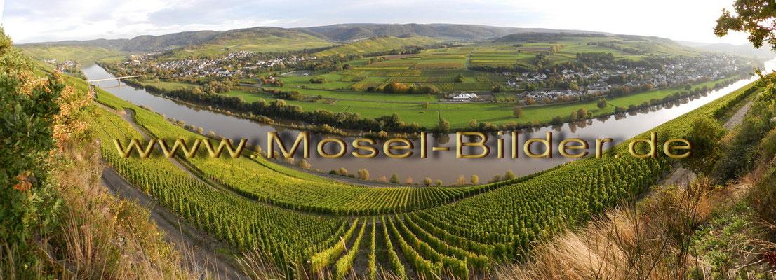 Die Mosel bei Mülheim und Brauneberg