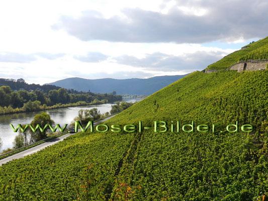 Steilhang bei Brauneberg