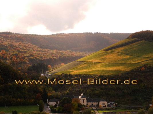 Kloster Machern und Wgt. M. Molitor