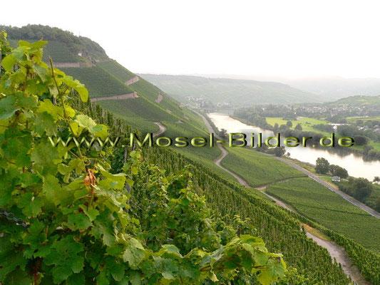 Blick auf die Weinlage Brauneberg Juffer