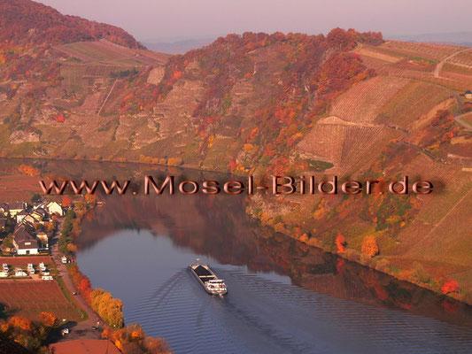 Die Moselloreley bei Piesport im Herbst