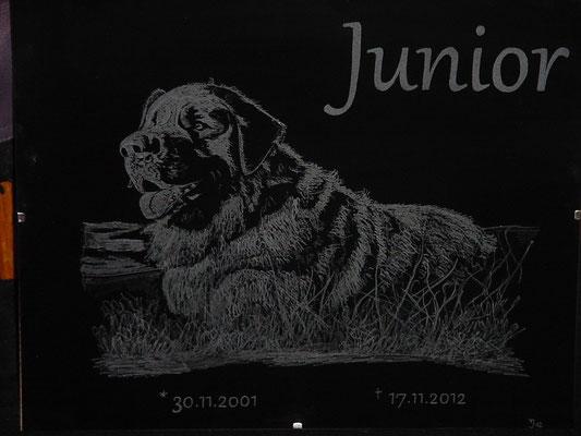 """""""Junior"""" - ein toller Hund"""