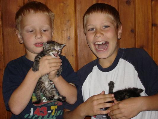 Babykatzen mit Lorenz und Max