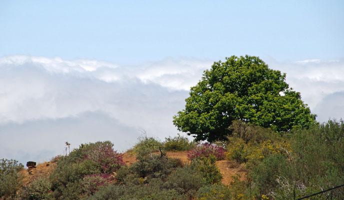 Oberhalb der Passatwolken die über dem Norden der Insel festhängen