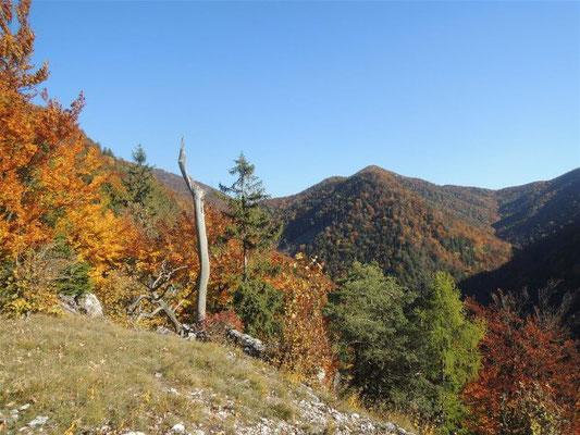 Le lieu de découverte, dans le massif montagneux de la Grande Fatra. Crédit : Karol Pieta, Académie slovaque des sciences (SAV)