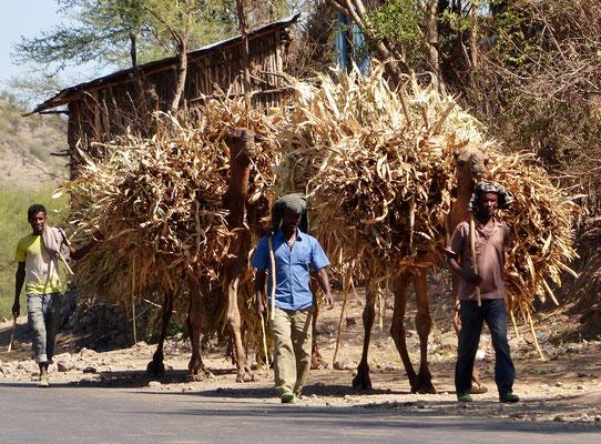 Äthiopien 2015: Finden Sie die Kamele!