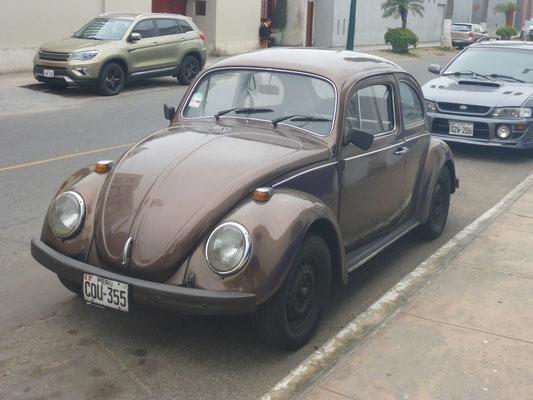 Peru 2018: Er läuft und läuft und läuft....der Brasilien-Käfer