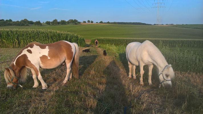 Familienausflug mit zwei Menschen, zwei Ponies und drei Hunden.