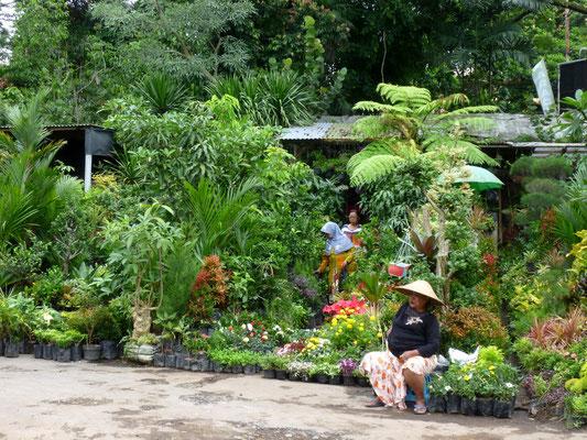 sur le marché aux fleurs