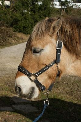 die Akupressur ist abgeschlossen - das Pony ist relaxt und die Energie fliesst wieder in den Meridianen