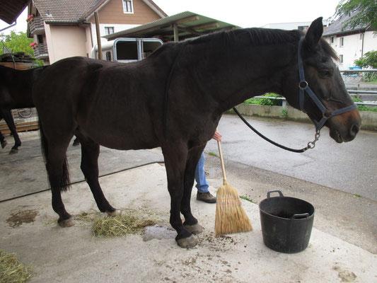 das Pferd steht während dem Egeleinsatz ruhig und gelassen da