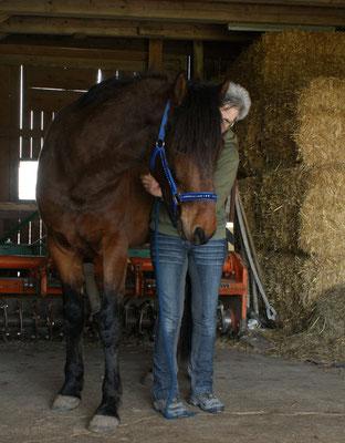 das 4jährige Pferd hat schnell Vertrauen gefasst