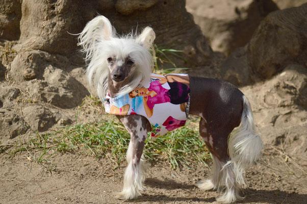 Vestido o arnés-vestido para perro