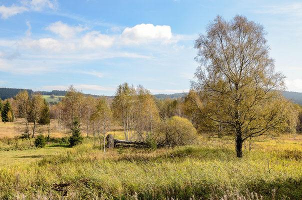 Auf moorigem Grund gewachsene Talwiesen im Königsfilz