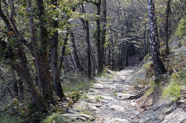 Schattiger Wanderweg