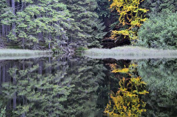 Der See Boubínské jezírko beim Kubany-Urwald
