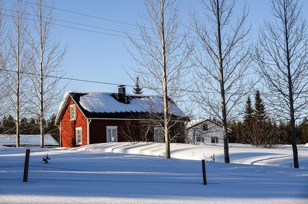 Sie Sonne befreit die Bäume vom Schnee