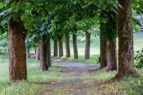 Marienbad ist von viel Grün umgeben