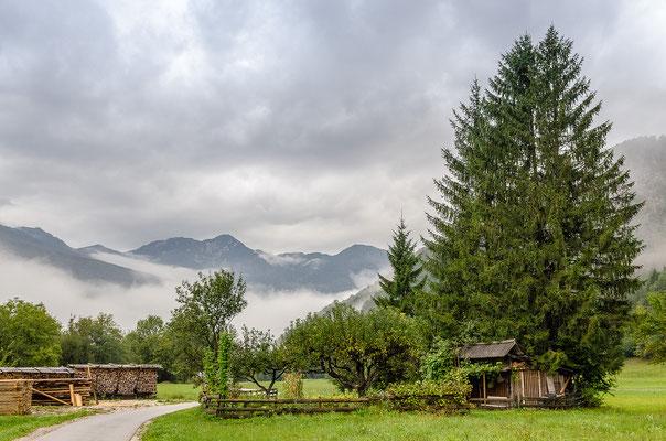 Ein schöner Weg führt von Savica zum Bohinjer See